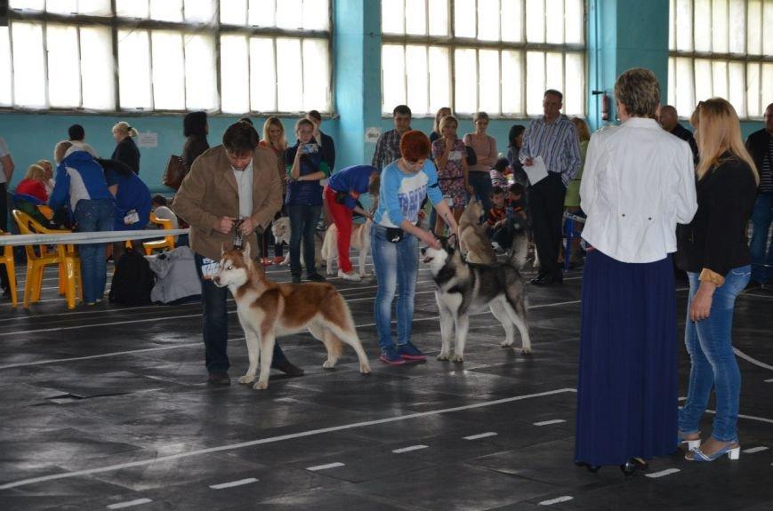 В Мариуполе лхаса апсо стала лучшей собакой Приазовья (ФОТО+ВИДЕО), фото-7