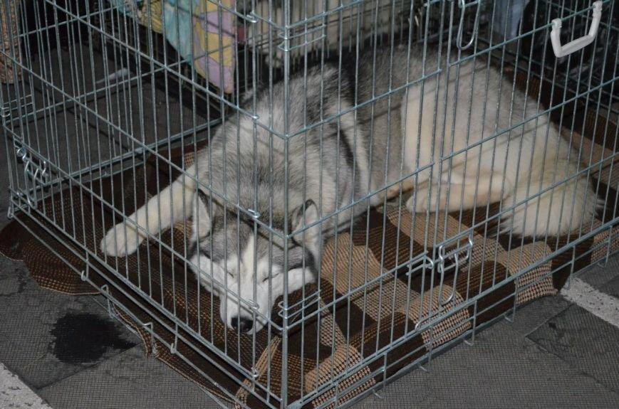 В Мариуполе лхаса апсо стала лучшей собакой Приазовья (ФОТО+ВИДЕО), фото-2