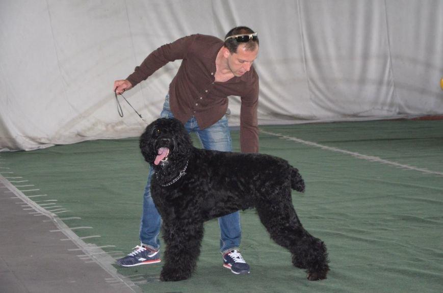 В Мариуполе лхаса апсо стала лучшей собакой Приазовья (ФОТО+ВИДЕО), фото-10