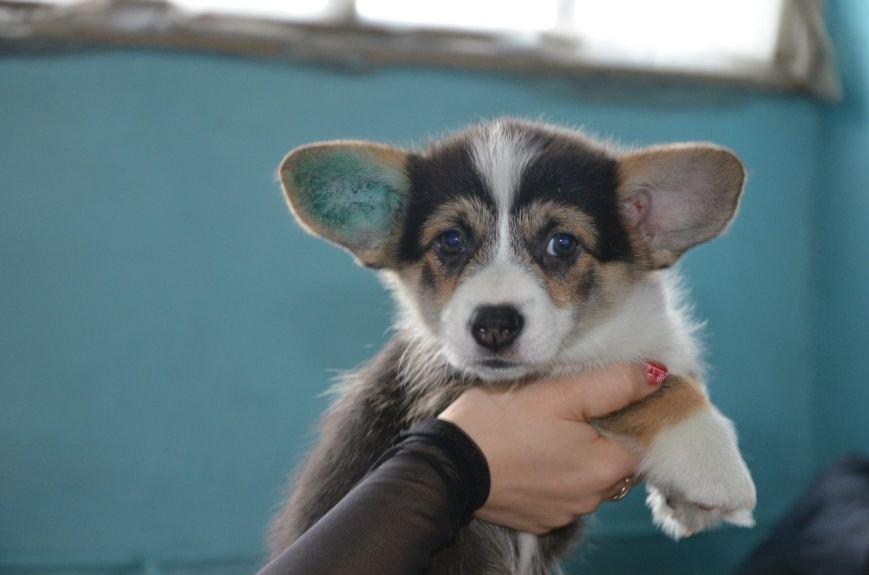 В Мариуполе лхаса апсо стала лучшей собакой Приазовья (ФОТО+ВИДЕО), фото-9