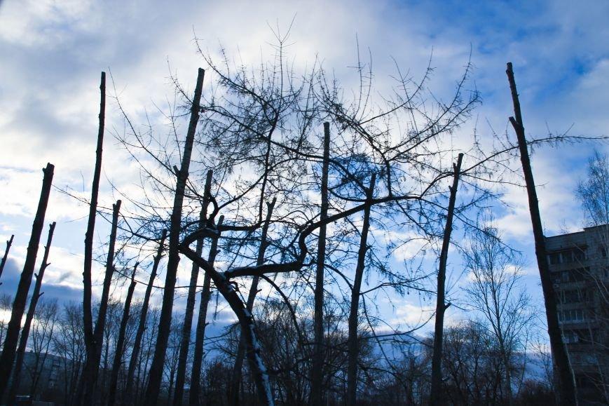 Почему в Ульяновске так безобразно обрезают деревья. ФОТО, фото-2