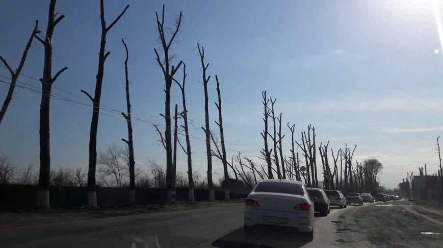 Почему в Ульяновске так безобразно обрезают деревья. ФОТО, фото-1