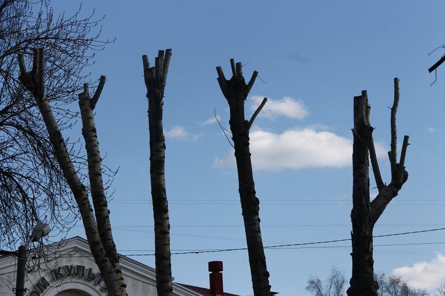 Почему в Ульяновске так безобразно обрезают деревья. ФОТО, фото-9