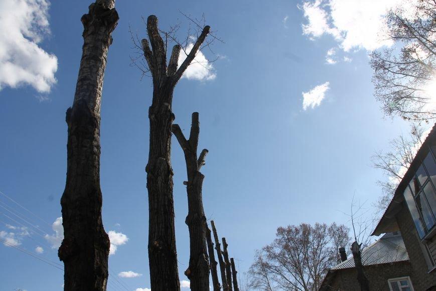 Почему в Ульяновске так безобразно обрезают деревья. ФОТО, фото-4
