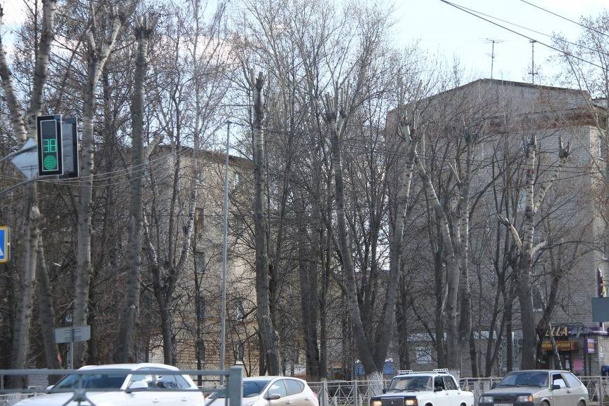 Почему в Ульяновске так безобразно обрезают деревья. ФОТО, фото-10