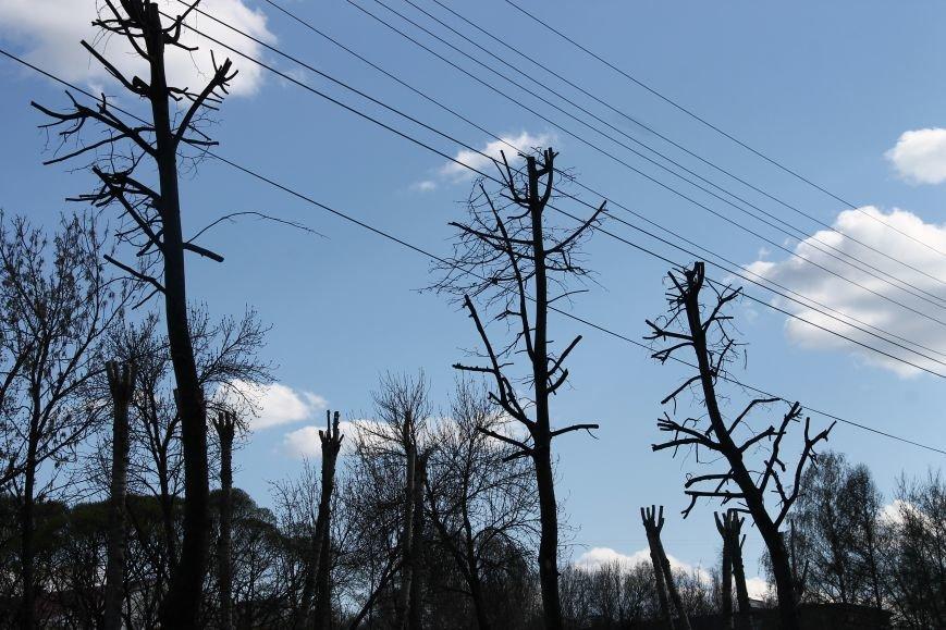 Почему в Ульяновске так безобразно обрезают деревья. ФОТО, фото-8