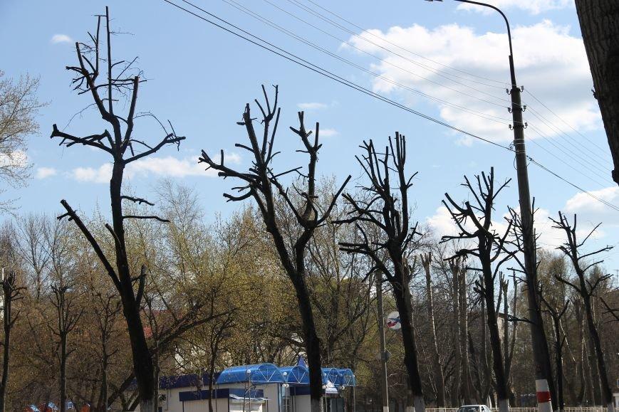 Почему в Ульяновске так безобразно обрезают деревья. ФОТО, фото-7