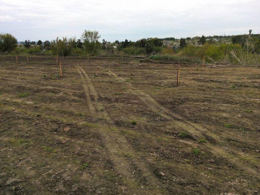 На Сумщине вандалы выкопали почти 170 деревьев (ФОТО), фото-3