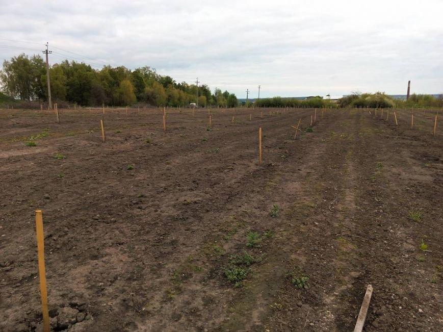 На Сумщине вандалы выкопали почти 170 деревьев (ФОТО), фото-1