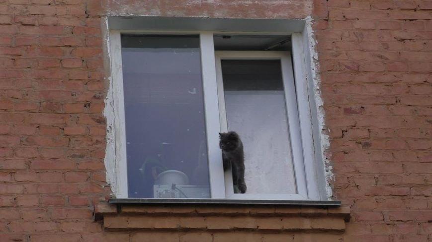 Черниговские эмчеэсники спасли кота, застрявшего в окне, фото-3