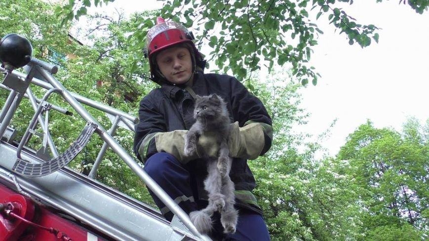 Черниговские эмчеэсники спасли кота, застрявшего в окне, фото-2