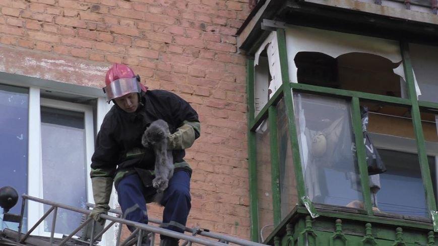 Черниговские эмчеэсники спасли кота, застрявшего в окне, фото-5