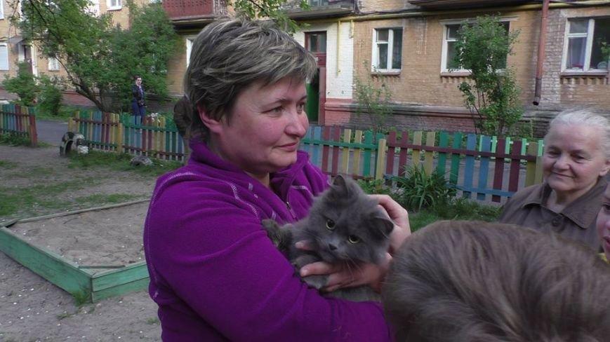 Черниговские эмчеэсники спасли кота, застрявшего в окне, фото-6