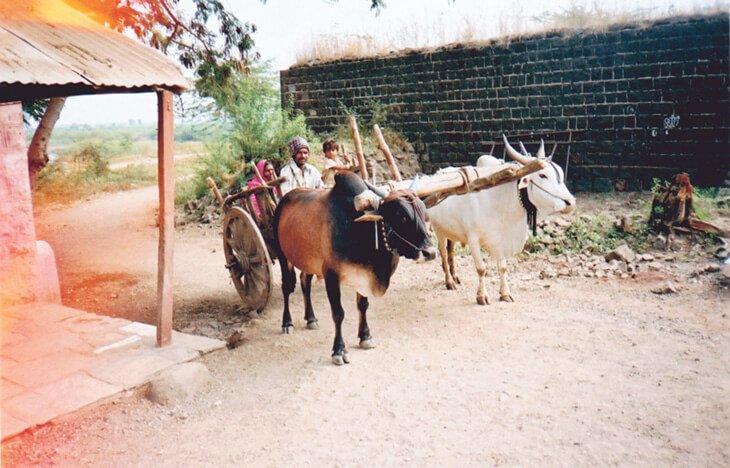 India2 (1)