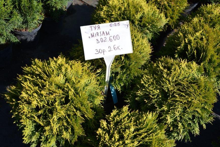 В Новополоцке открылась выставка-продажа ландшафтных растений (+фото), фото-2
