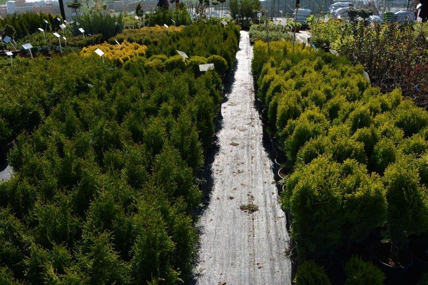 В Новополоцке открылась выставка-продажа ландшафтных растений (+фото), фото-1