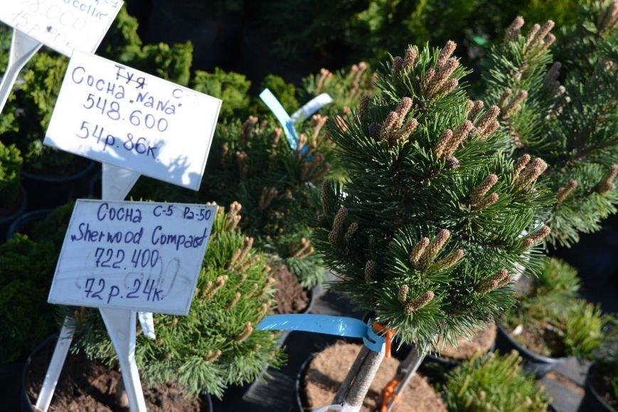 В Новополоцке открылась выставка-продажа ландшафтных растений (+фото), фото-5
