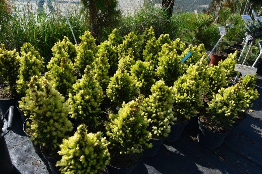 В Новополоцке открылась выставка-продажа ландшафтных растений (+фото), фото-3