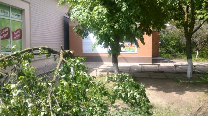 В Херсоне продолжается незаконная вырубка деревьев (фото), фото-2