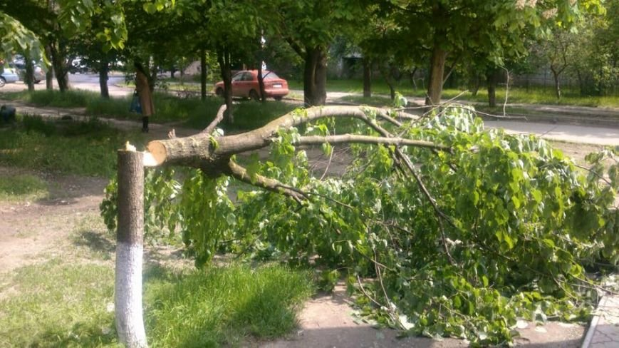 В Херсоне продолжается незаконная вырубка деревьев (фото), фото-1