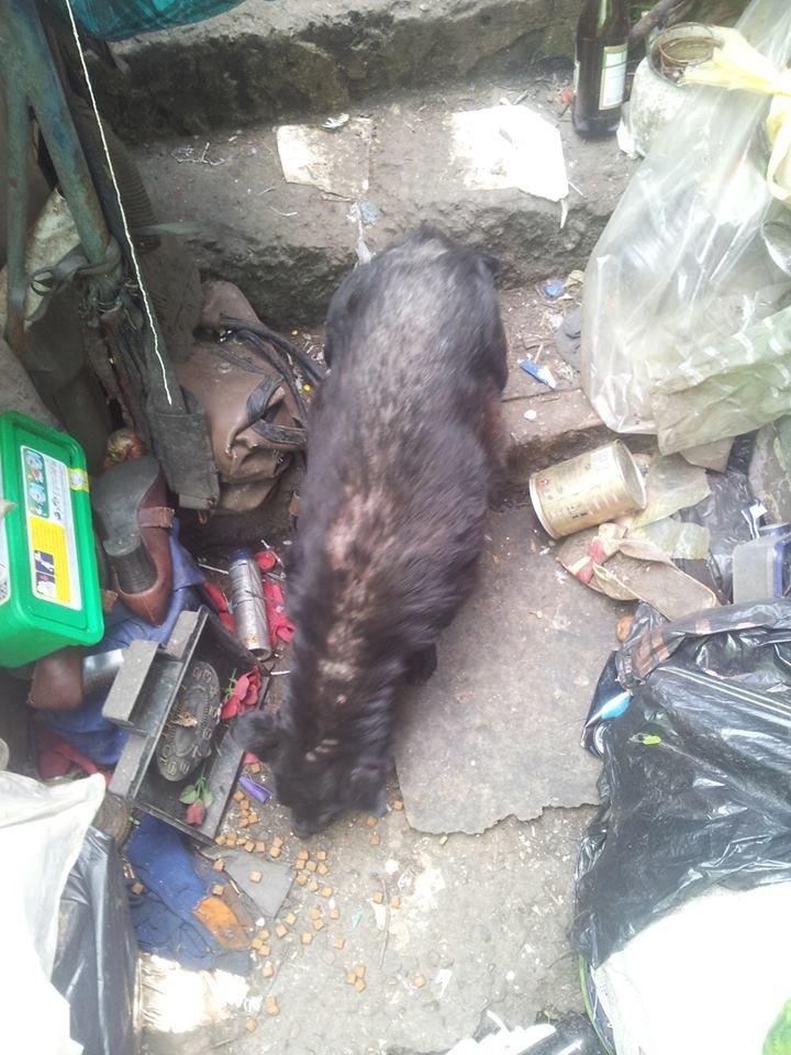 У Чернівцях сусіди побили бабусю, яка тримає в домі 20 собак, фото-1