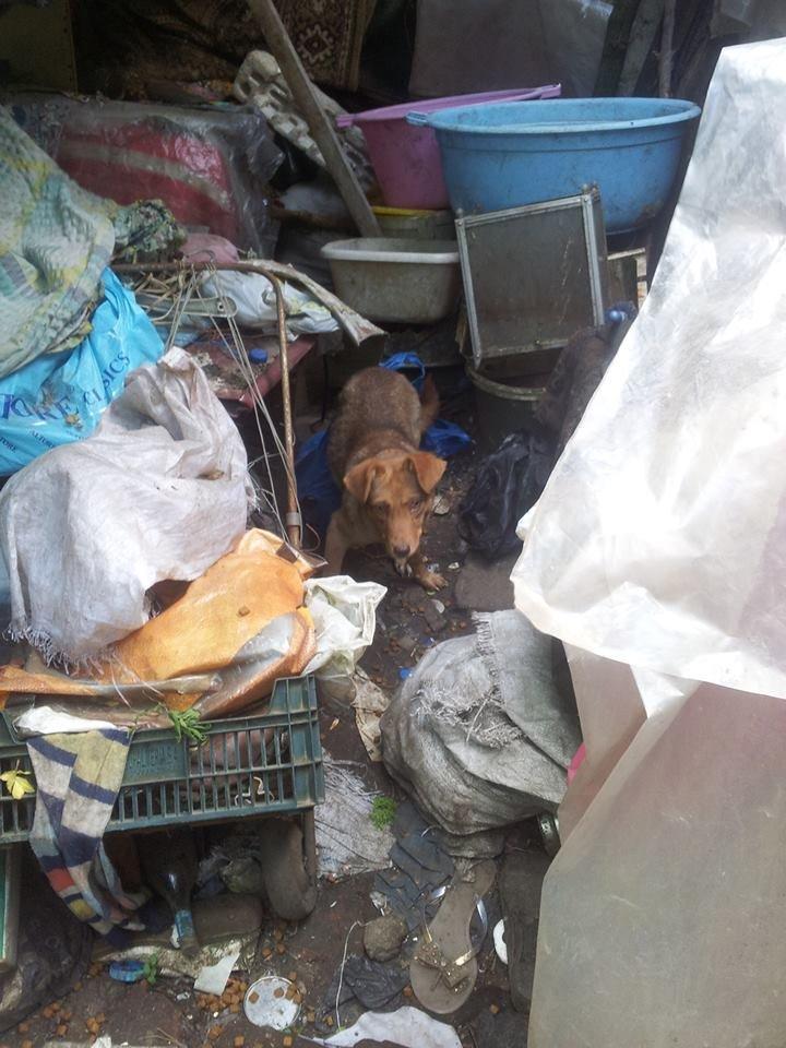 У Чернівцях сусіди побили бабусю, яка тримає в домі 20 собак, фото-4
