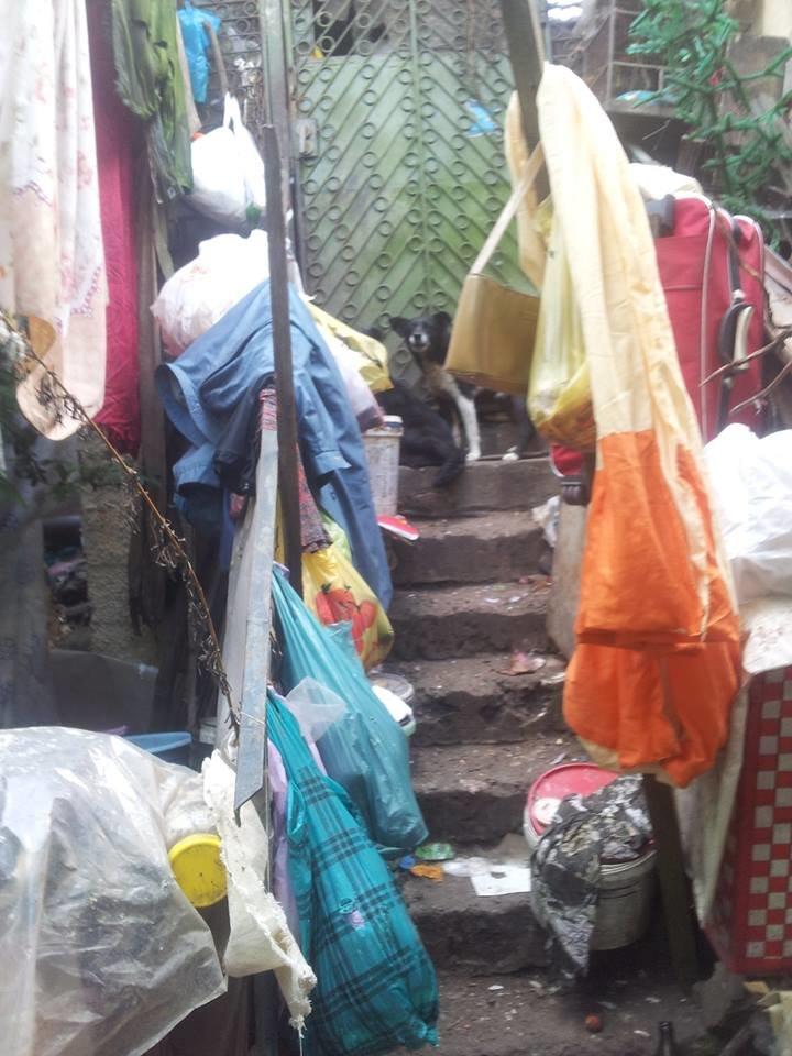 У Чернівцях сусіди побили бабусю, яка тримає в домі 20 собак, фото-5