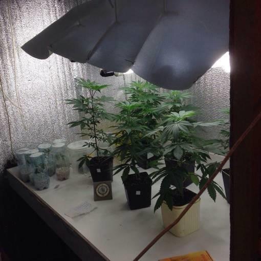 У жителя Днепродзержинска изъяли 200 кг марихуаны на 20 млн гривен, фото-3