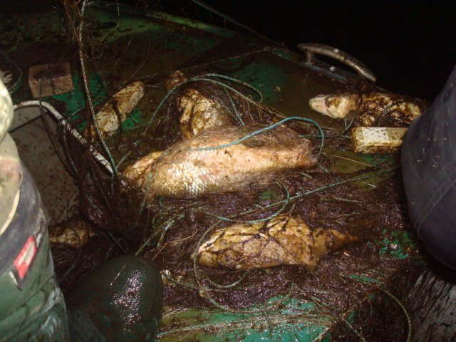 В Днепродзержинске браконьеры продолжают атаковать водные ресурсы, фото-2