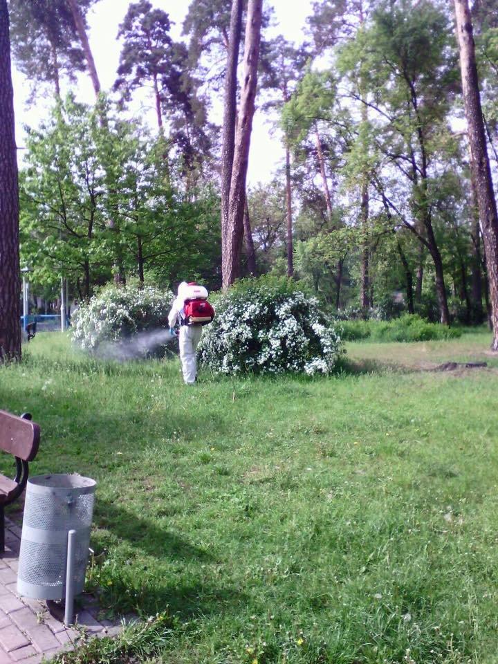В Киеве начали травить клещей, фото-1