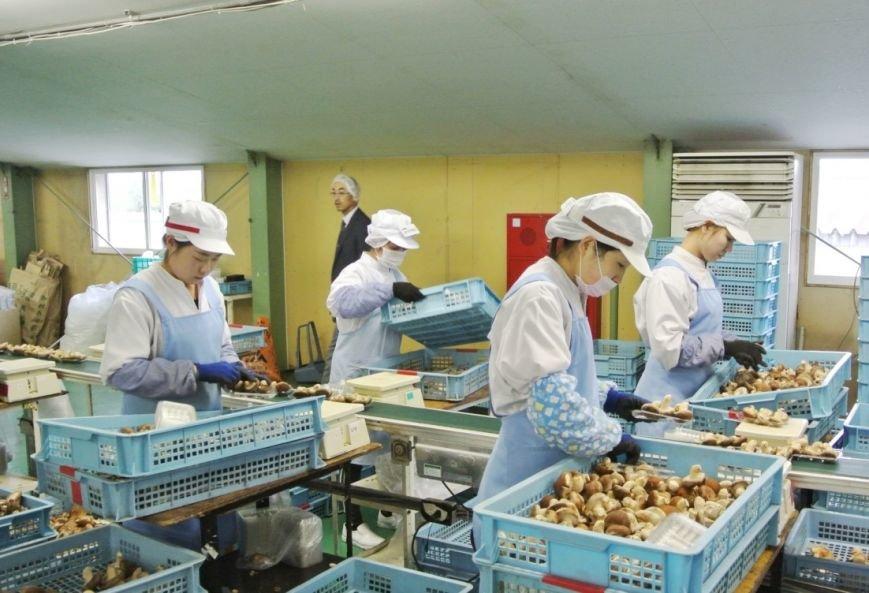 Японские теплицы будут использовать на Сахалине для выращивания овощей, фото-2