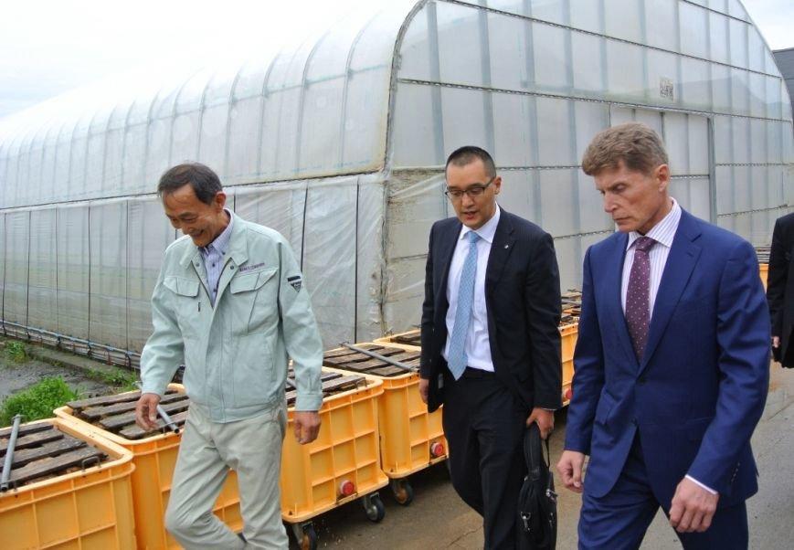 Японские теплицы будут использовать на Сахалине для выращивания овощей, фото-3