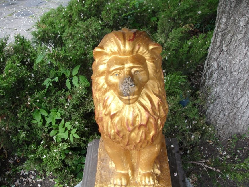 У Білій Церкві побили лева (фото), фото-2