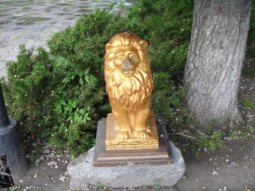 У Білій Церкві побили лева (фото), фото-1