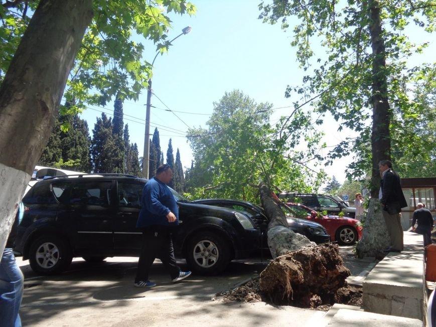 ФОТО: в Ялте дерево рухнуло на платную паркову с автомобилями, фото-1