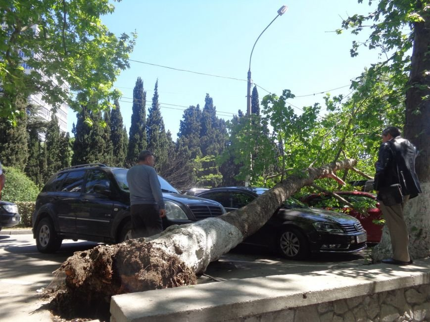 ФОТО: в Ялте дерево рухнуло на платную паркову с автомобилями, фото-4