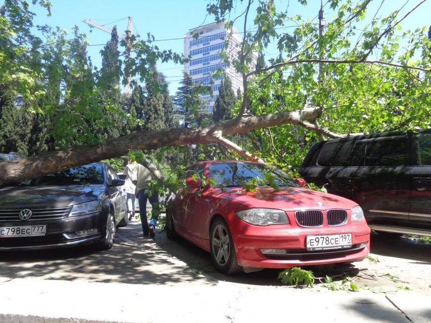 ФОТО: в Ялте дерево рухнуло на платную паркову с автомобилями, фото-6