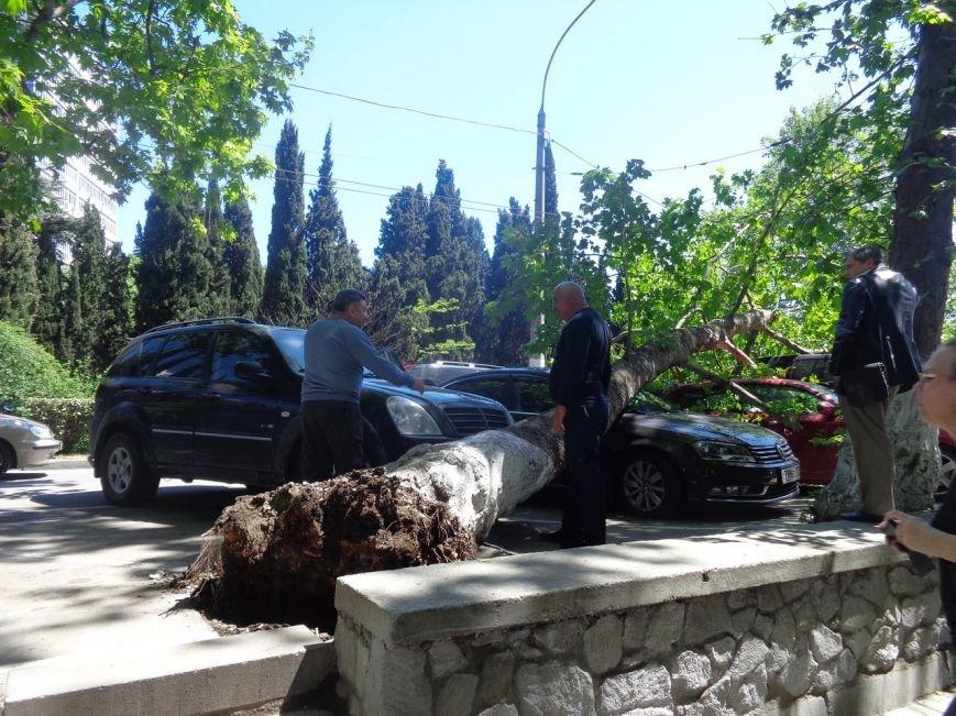 ФОТО: в Ялте дерево рухнуло на платную паркову с автомобилями, фото-3