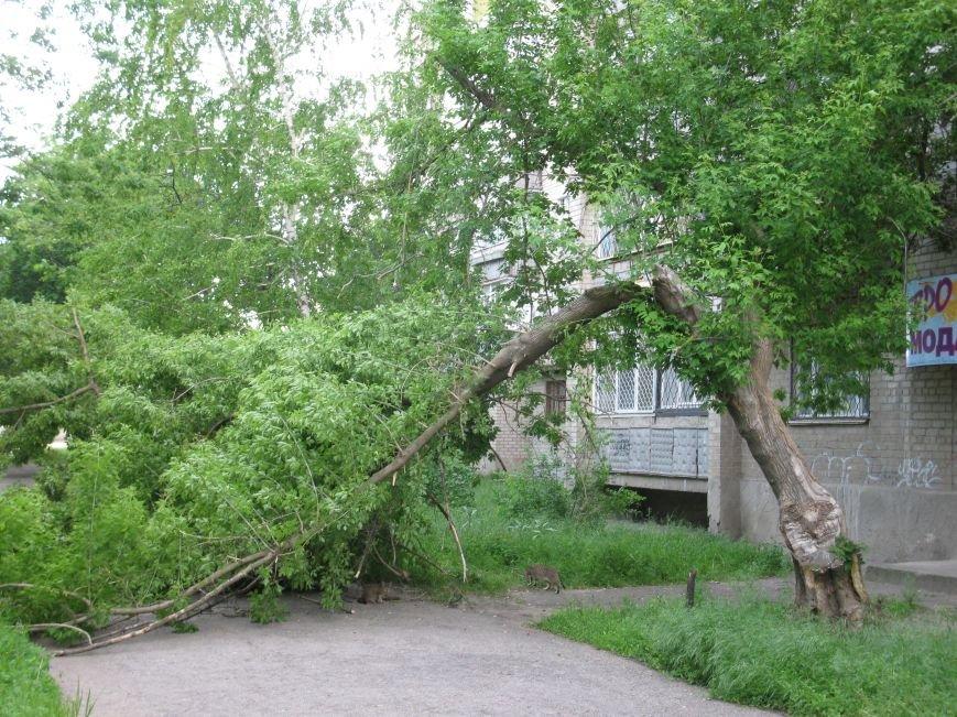 За половину мая в Мелитополе выпала месячная норма осадков, фото-1