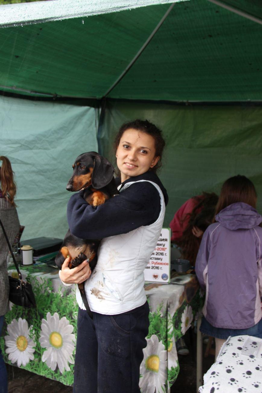 В Краматорске состоялась национальная выставка собак, фото-1