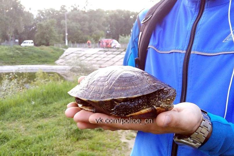 Полицейские в Чернигове спасли черепаху, фото-1