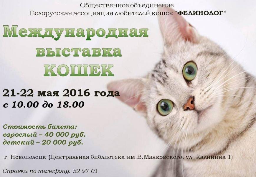 «Ночь музеев», вечеринка с конкурсантками «Мисс Новополоцк» и кошки в библиотеке: куда сходить в Новополоцке и Полоцке с 20 по 27 мая, фото-3