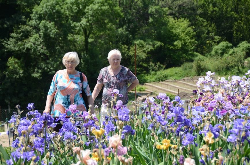 200 сортов ириса одновременно цветут в Никитском саду, фото-1