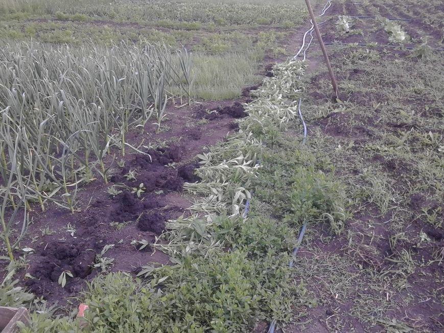 В Бахмутском районе ликвидировали «ферму» по изготовлению марихуаны, фото-1