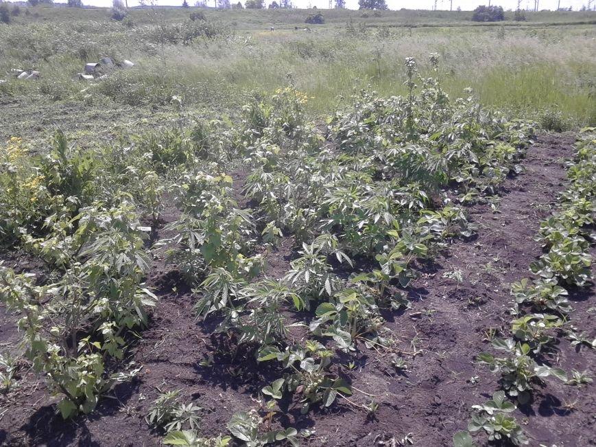 В Бахмутском районе ликвидировали «ферму» по изготовлению марихуаны, фото-2