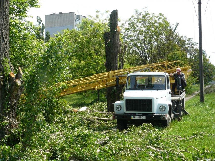 Как «Запорожоблэнерго» в Бердянске по–варварски деревья вырубало (ФОТОФАКТ), фото-5