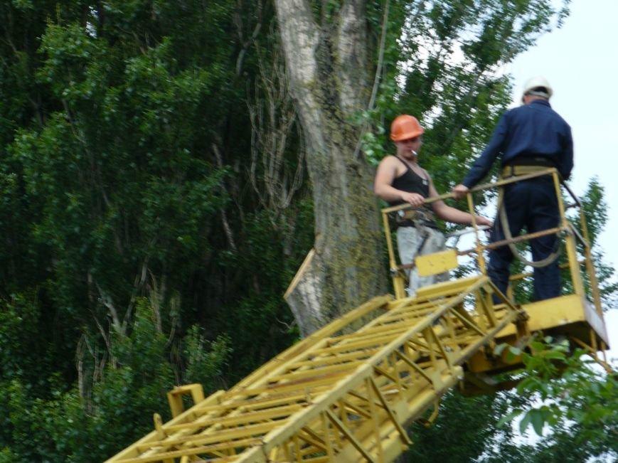 Как «Запорожоблэнерго» в Бердянске по–варварски деревья вырубало (ФОТОФАКТ), фото-1