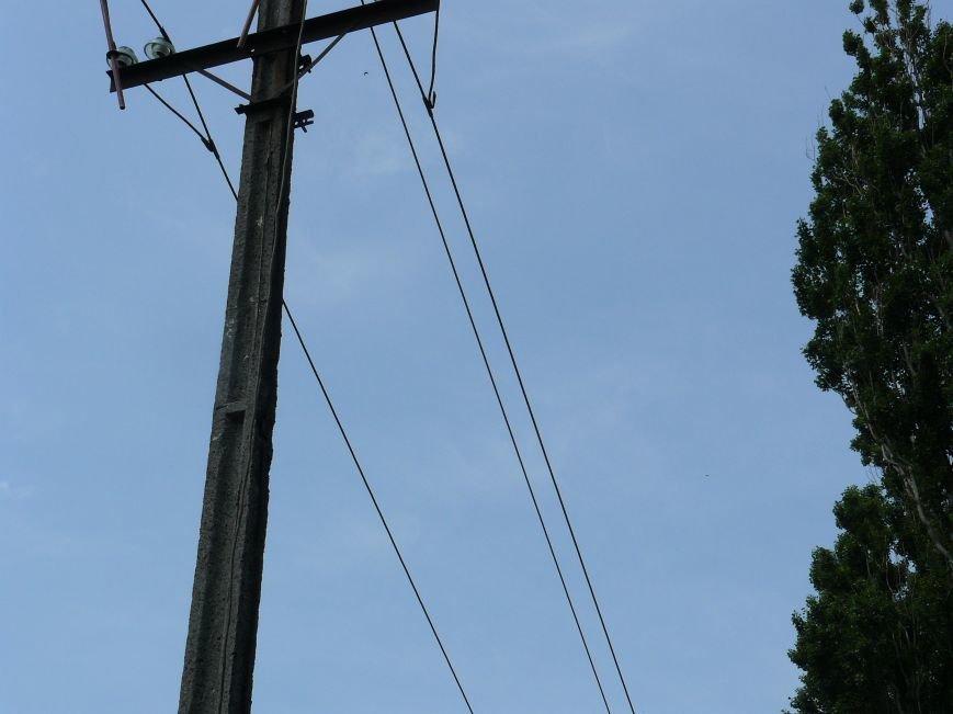Как «Запорожоблэнерго» в Бердянске по–варварски деревья вырубало (ФОТОФАКТ), фото-6