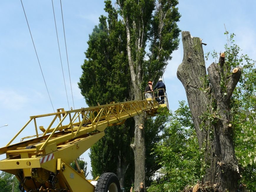 Как «Запорожоблэнерго» в Бердянске по–варварски деревья вырубало (ФОТОФАКТ), фото-4