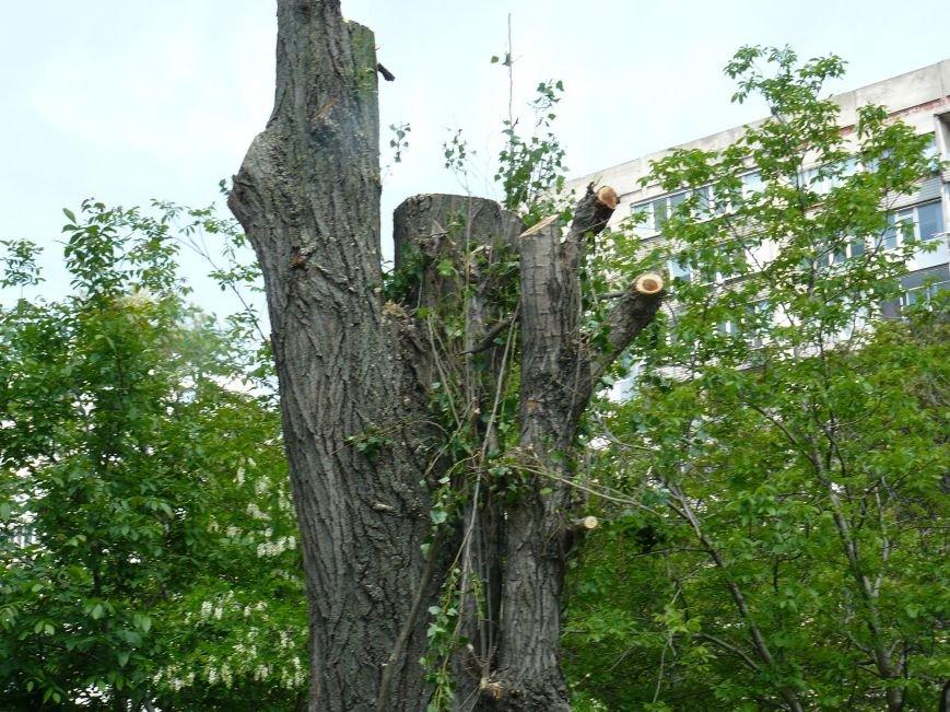 Как «Запорожоблэнерго» в Бердянске по–варварски деревья вырубало (ФОТОФАКТ), фото-3